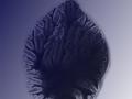H.S.L.-Folleto-Proto-bacteria-hydrogenica-Impresión-digital-sobre-papel-cm.21x297-2004-1-1