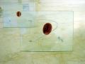 """H.S.L. (detalle placas-de-protopintura)"" -2004-"